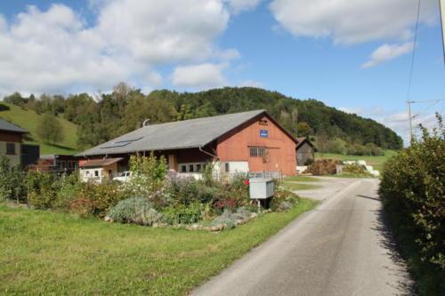 Tiere Ziegen +Kühe 2012 166